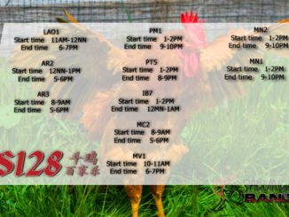 Jadwal Sabung Ayam S128 04 Maret 2020